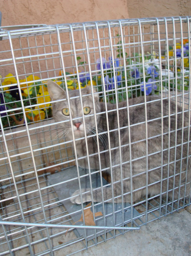Feral Cat Program - The Humane Society of West Texas